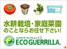 水耕栽培のエコゲリラ2